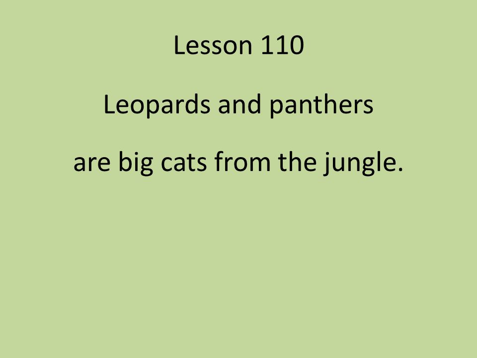 Leopards and panthers are big cats from the jungle.