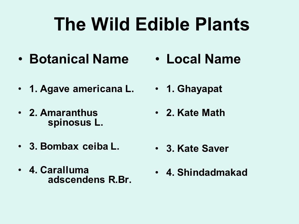 The Wild Edible Plants Botanical Name Local Name 1. Agave americana L.