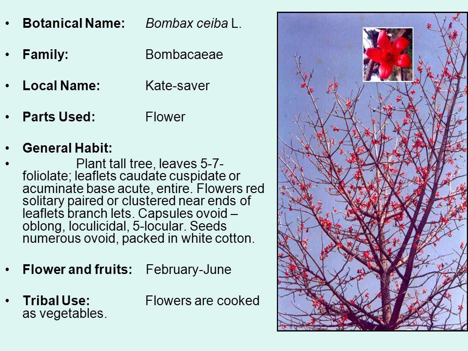 Botanical Name: Bombax ceiba L.