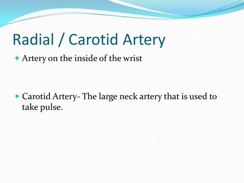 Radial / Carotid Artery