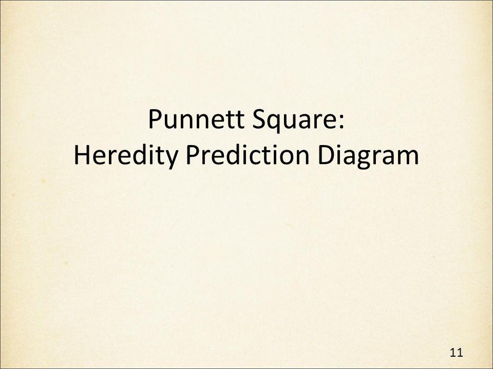 Punnett Square: Heredity Prediction Diagram