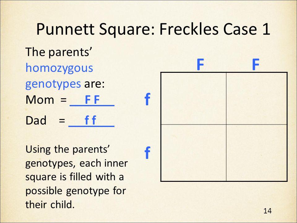 Punnett Square: Freckles Case 1