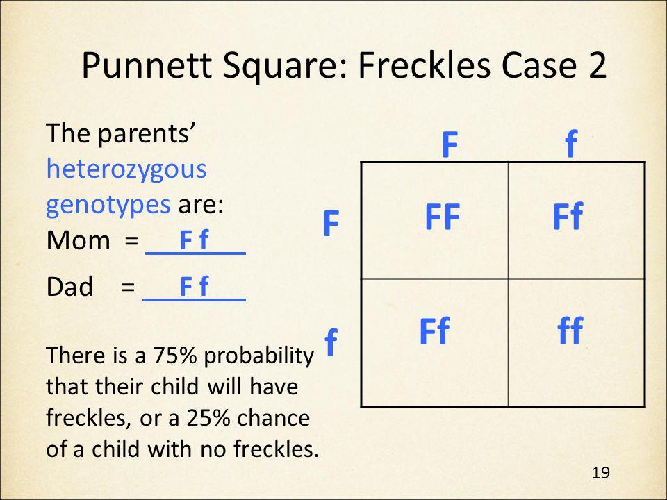 Punnett Square: Freckles Case 2