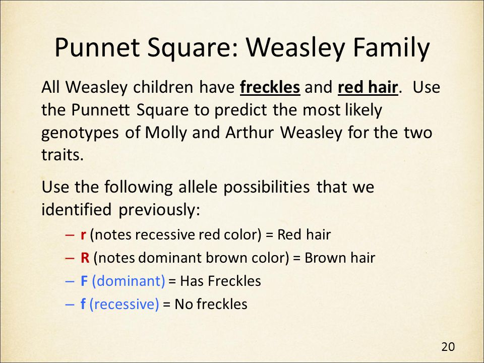 Punnet Square: Weasley Family