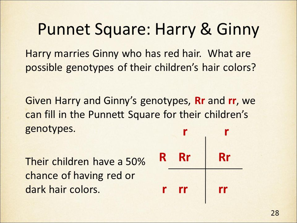 Punnet Square: Harry & Ginny