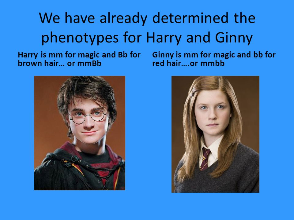 We have already determined the phenotypes for Harry and Ginny