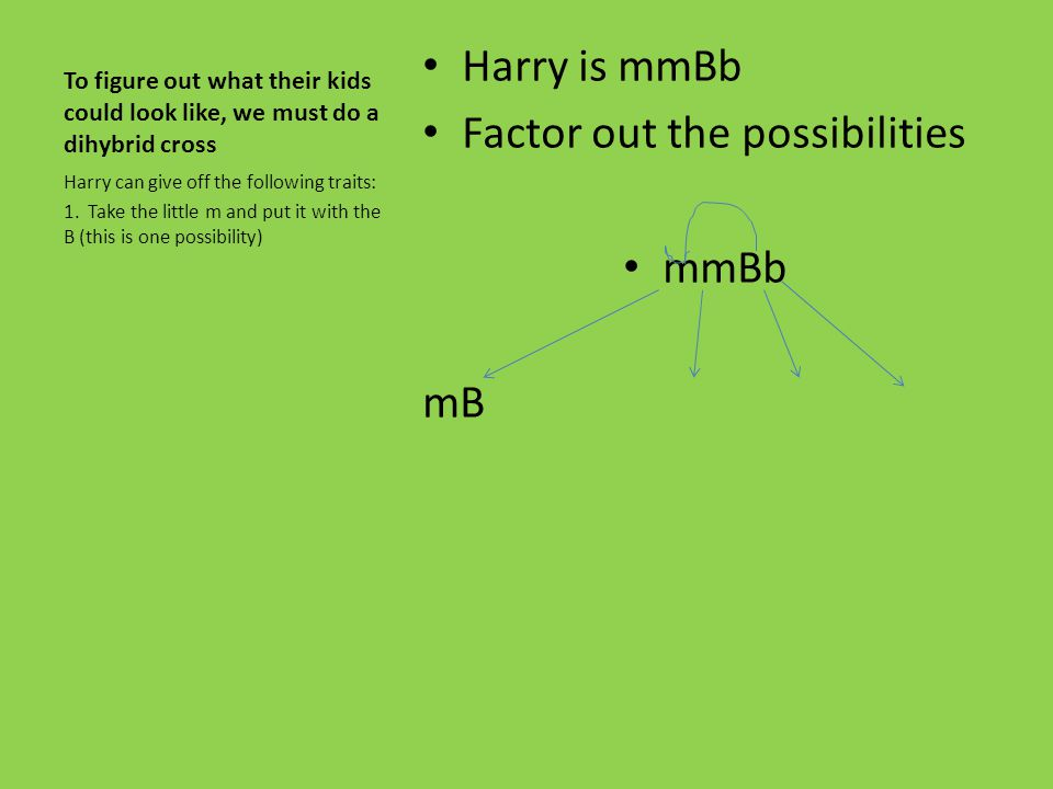 Factor out the possibilities mmBb mB
