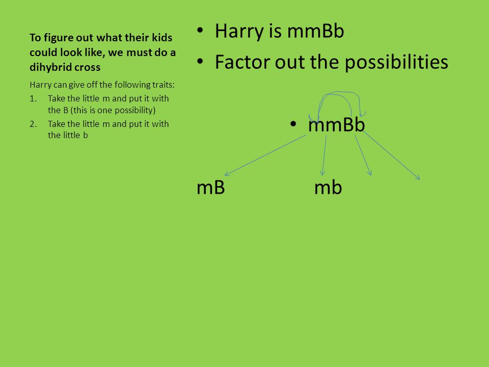 Factor out the possibilities mmBb mB mb