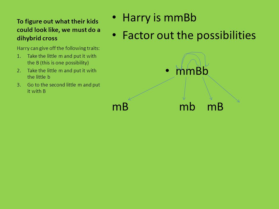 Factor out the possibilities mmBb mB mb mB