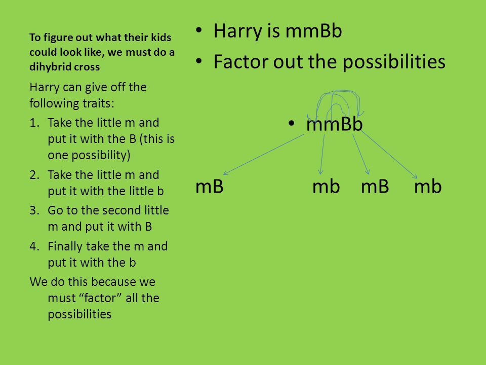Factor out the possibilities mmBb mB mb mB mb