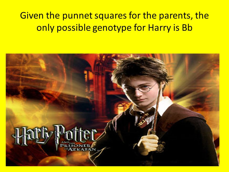 Given the punnet squares for the parents, the only possible genotype for Harry is Bb