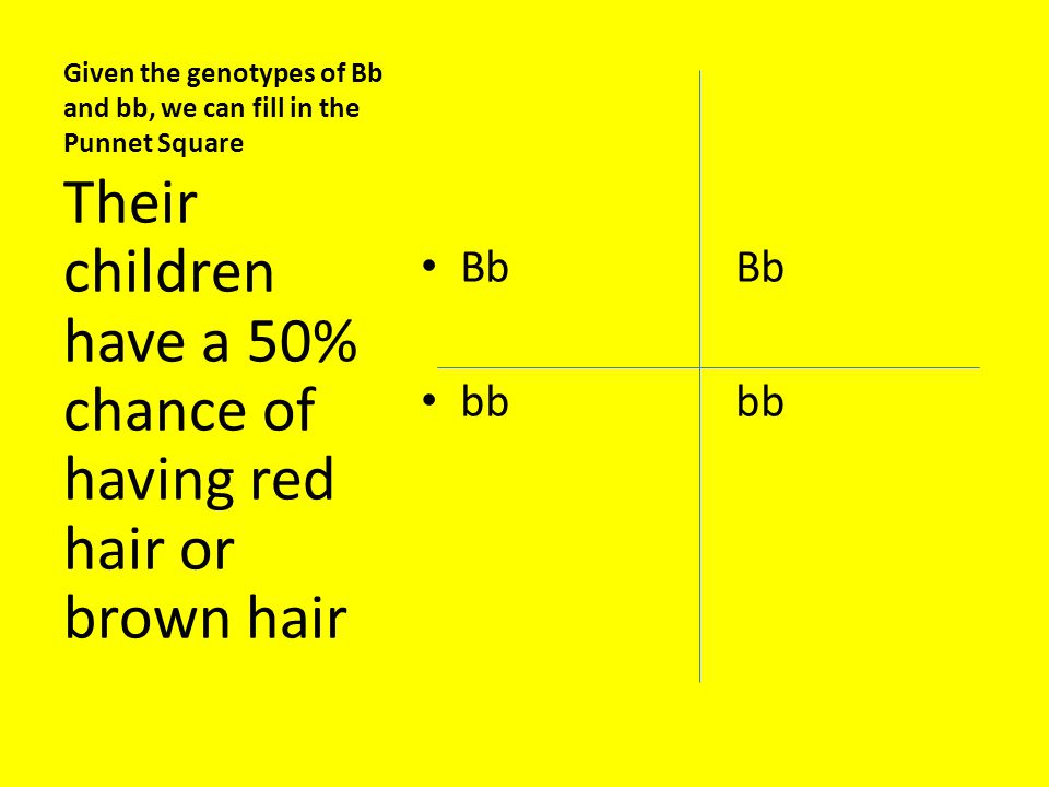 Given the genotypes of Bb and bb, we can fill in the Punnet Square