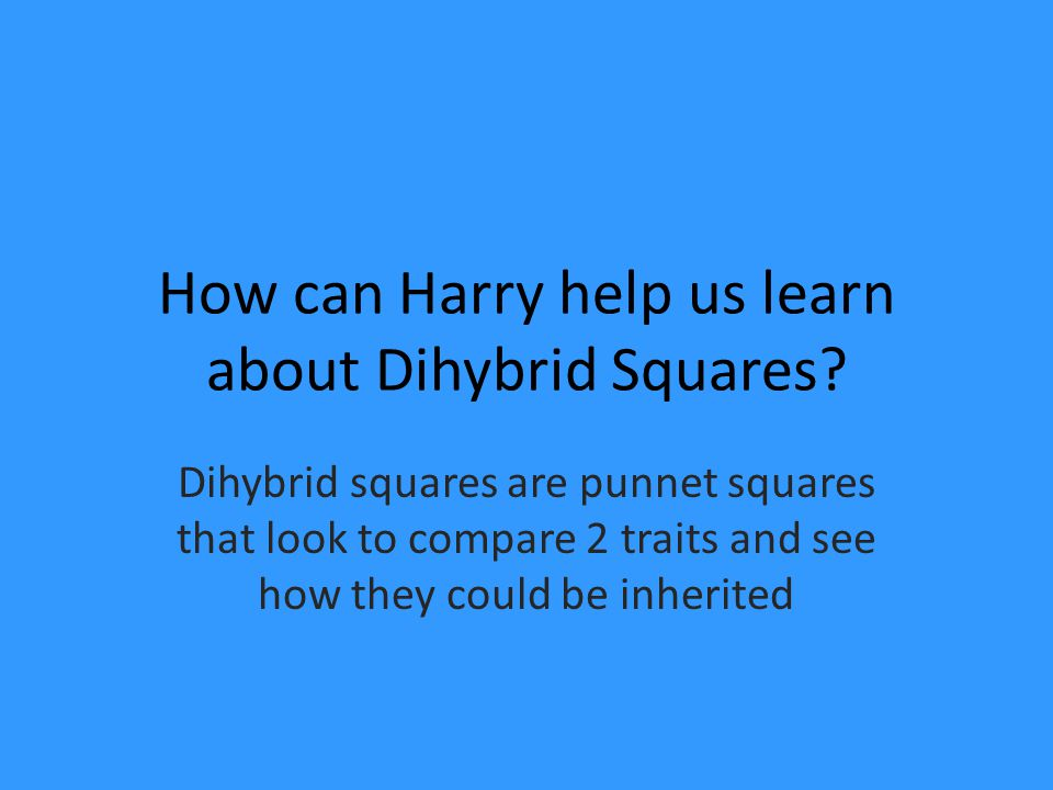 How can Harry help us learn about Dihybrid Squares