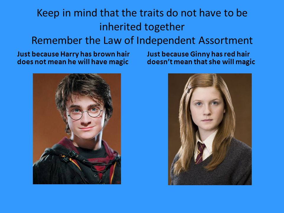 Keep in mind that the traits do not have to be inherited together Remember the Law of Independent Assortment