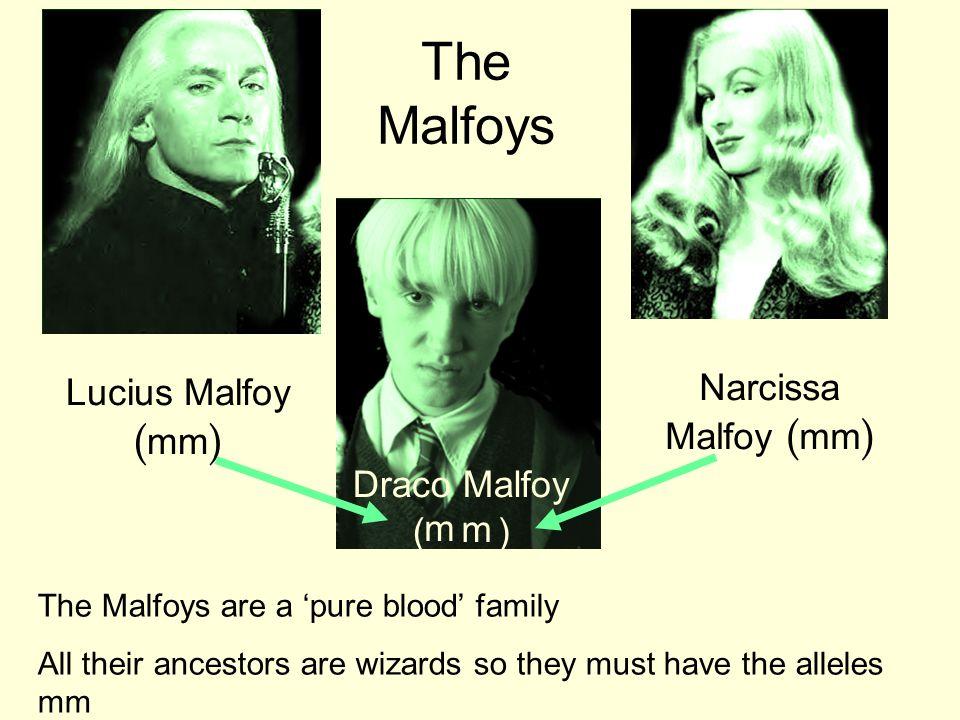 The Malfoys Narcissa Malfoy (mm) Lucius Malfoy (mm) Draco Malfoy ( ) m