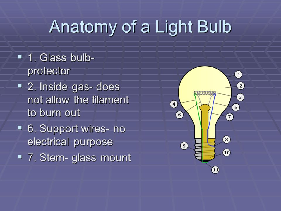 Anatomy of a light bulb