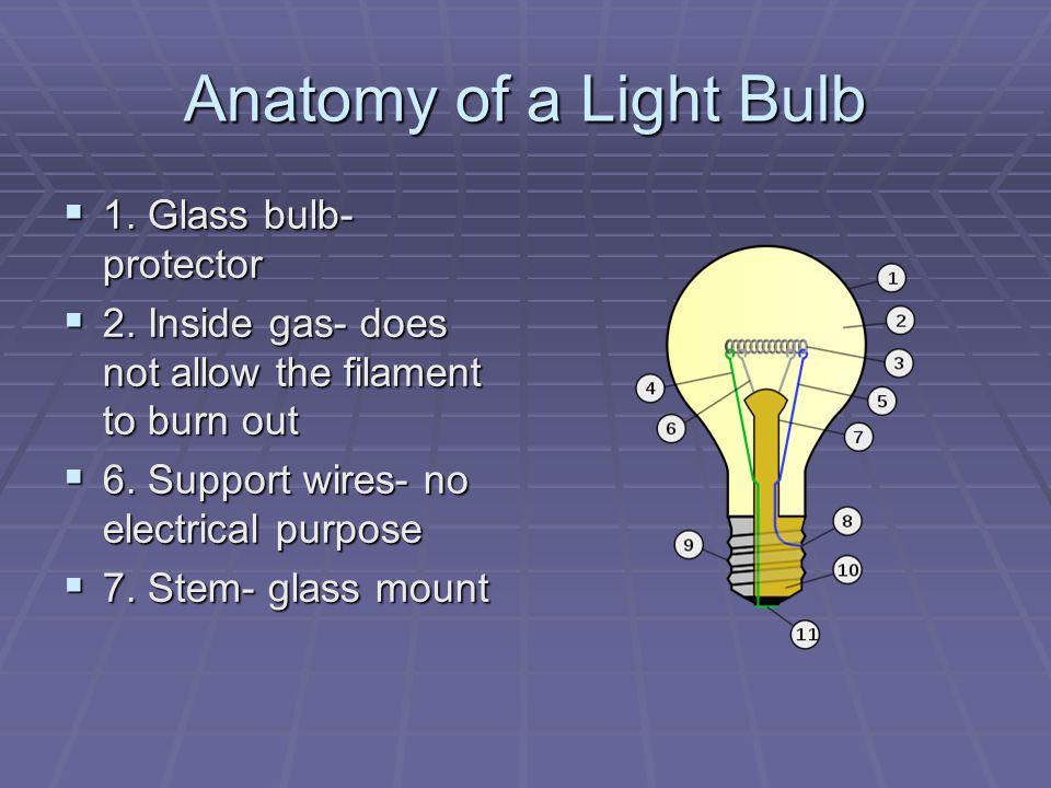 Anatomy of a Light Bulb 1. Glass bulb- protector