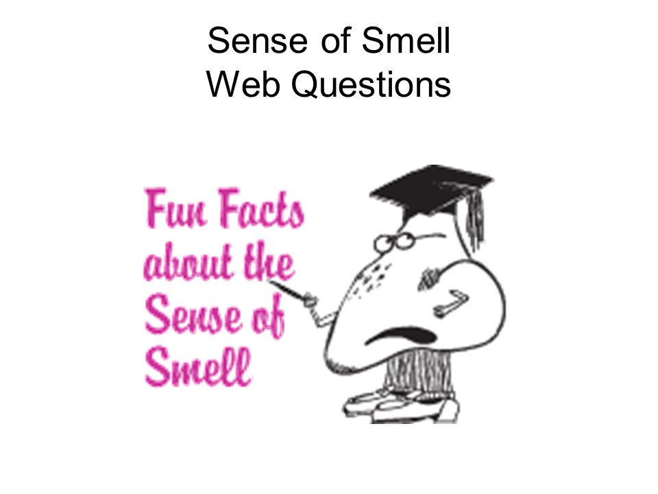 Sense of Smell Web Questions