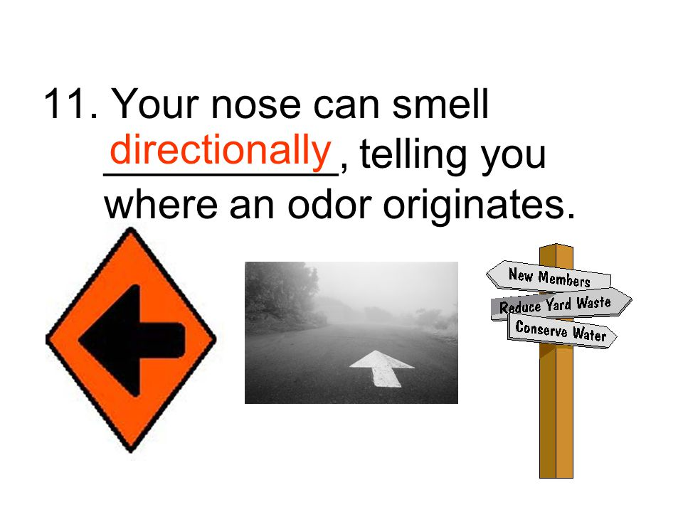 11. Your nose can smell __________, telling you where an odor originates.