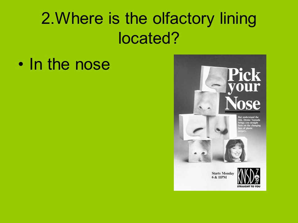 2.Where is the olfactory lining located