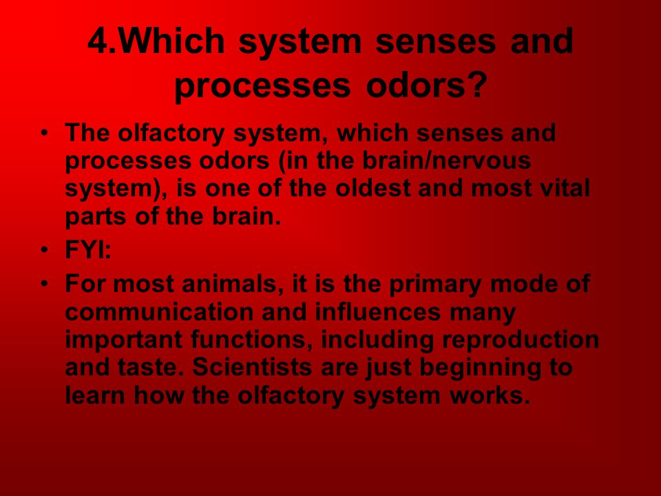 4.Which system senses and processes odors