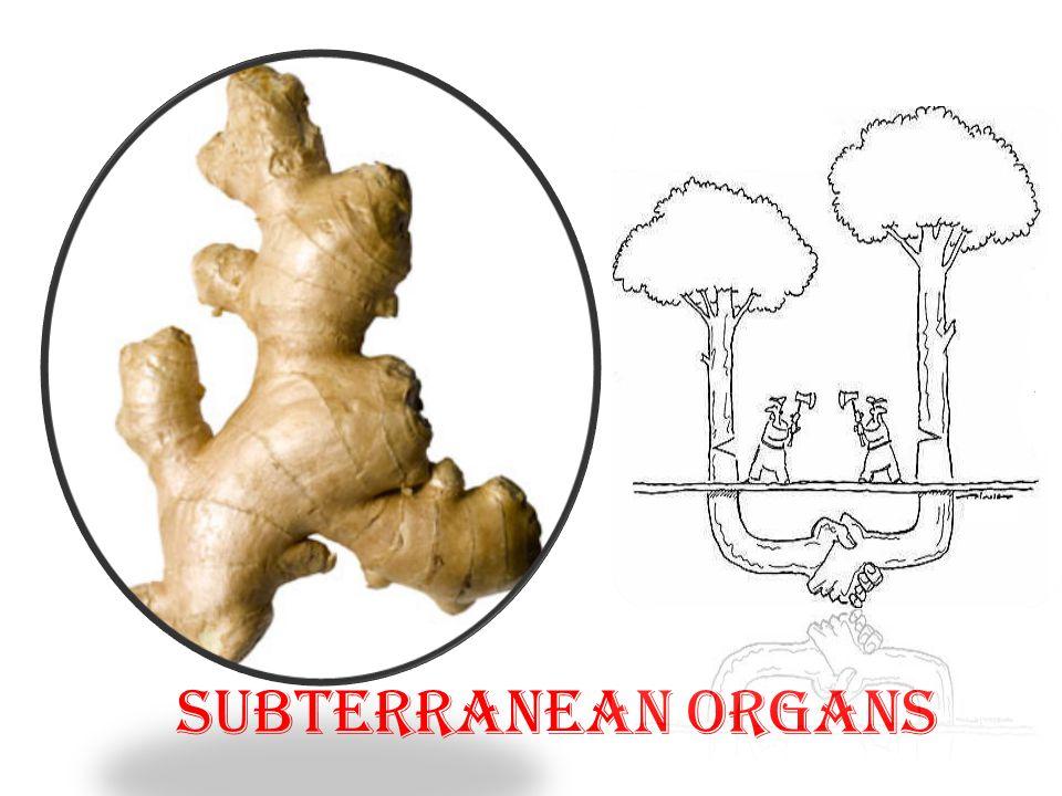 Subterranean Organs