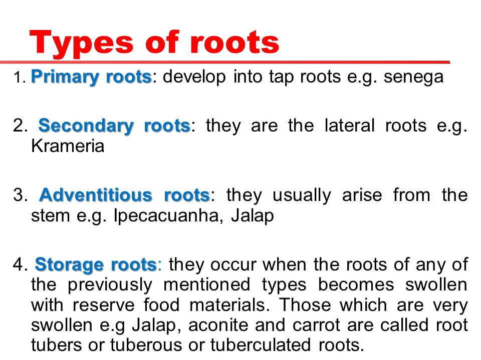 Types of roots 1. Primary roots: develop into tap roots e.g. senega. 2. Secondary roots: they are the lateral roots e.g. Krameria.