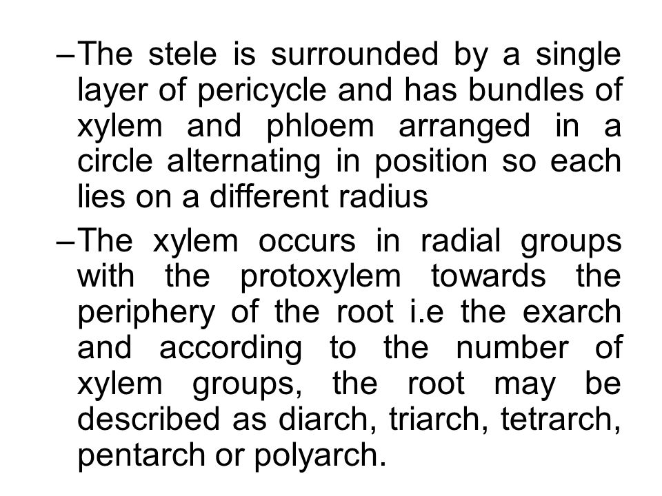 The stele is surrounded by a single layer of pericycle and has bundles of xylem and phloem arranged in a circle alternating in position so each lies on a different radius