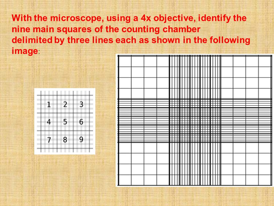 With the microscope, using a 4x objective, identify the nine main squares of the counting chamber
