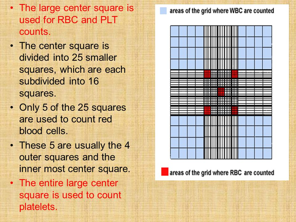 The large center square is used for RBC and PLT counts.