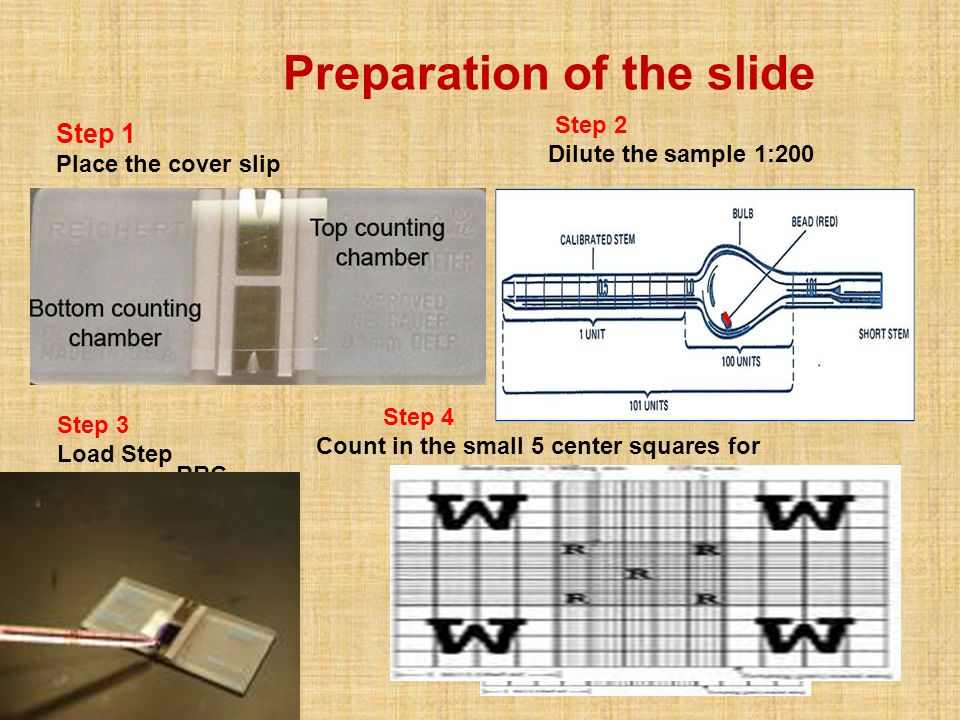 Preparation of the slide
