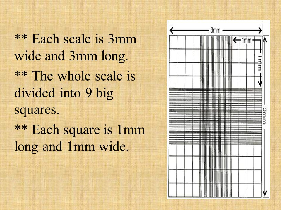 ** Each scale is 3mm wide and 3mm long.