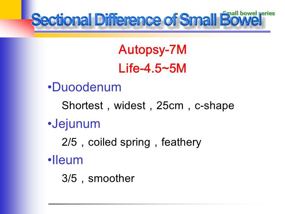 Autopsy-7M Life-4.5~5M Duoodenum Jejunum Ileum