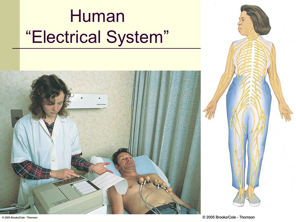 Human Electrical System