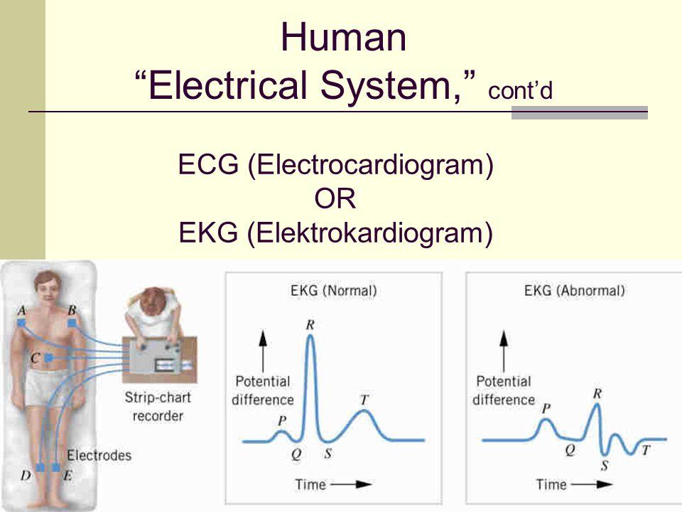 ECG (Electrocardiogram) OR EKG (Elektrokardiogram)