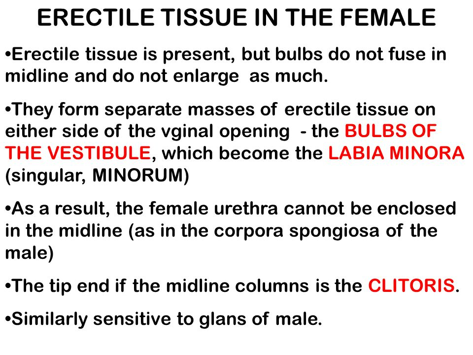 ERECTILE TISSUE IN THE FEMALE