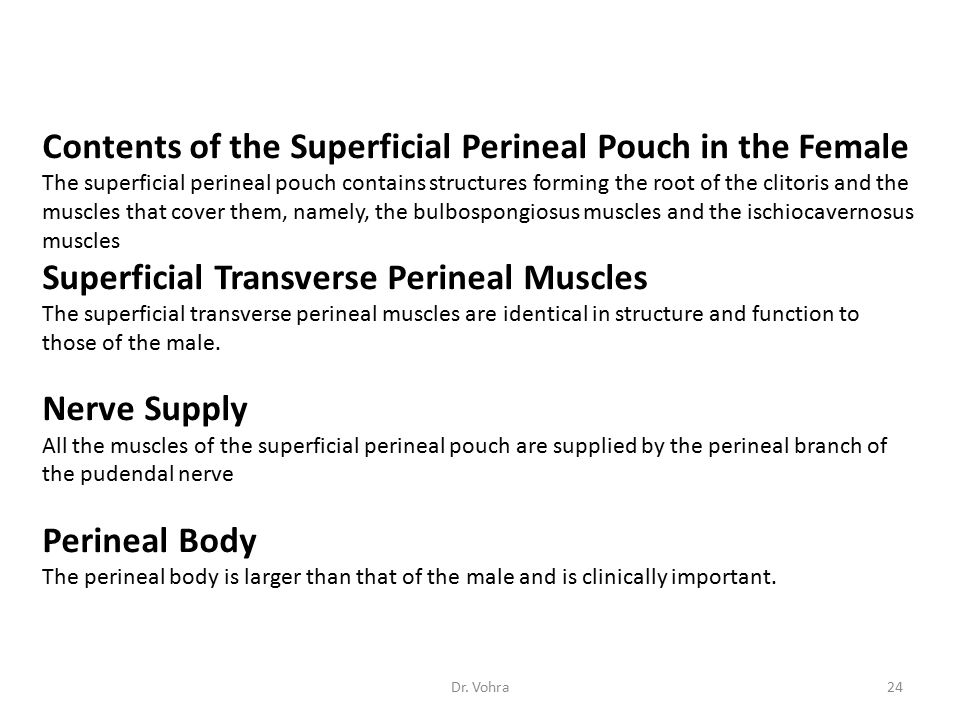 Contents of the Superficial Perineal Pouch in the Female
