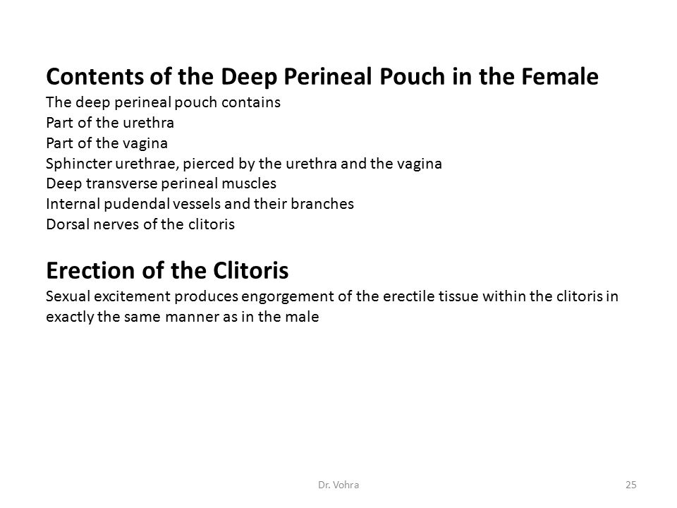 Contents of the Deep Perineal Pouch in the Female