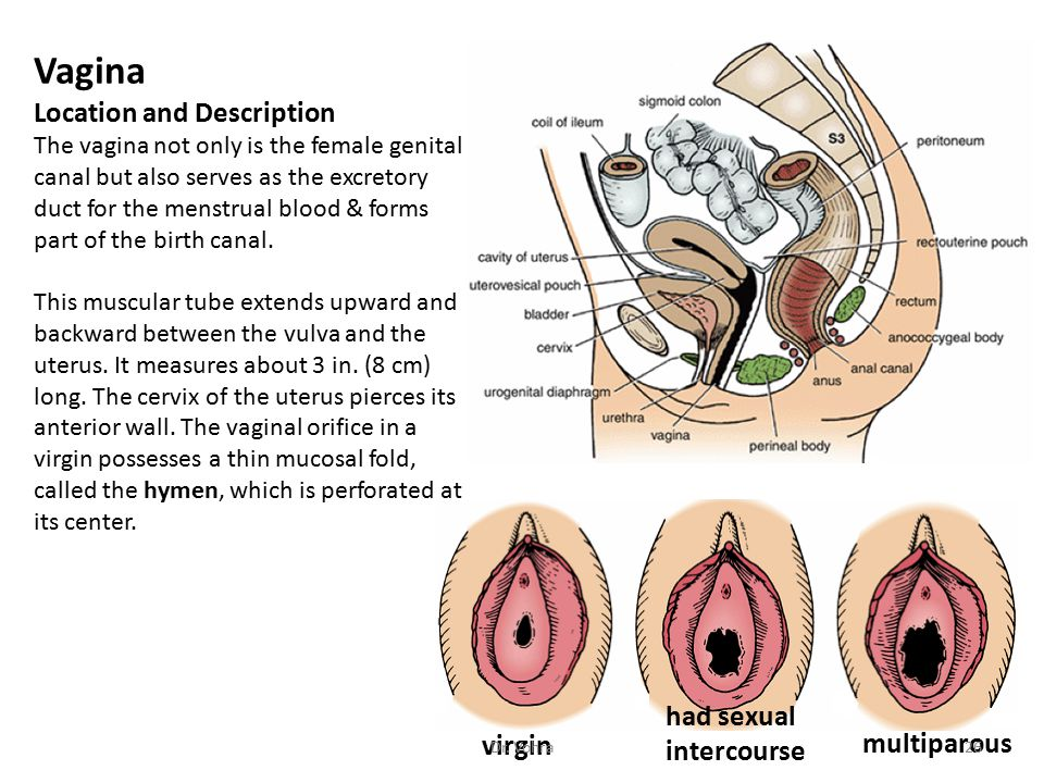 pics-of-virgin-vagina