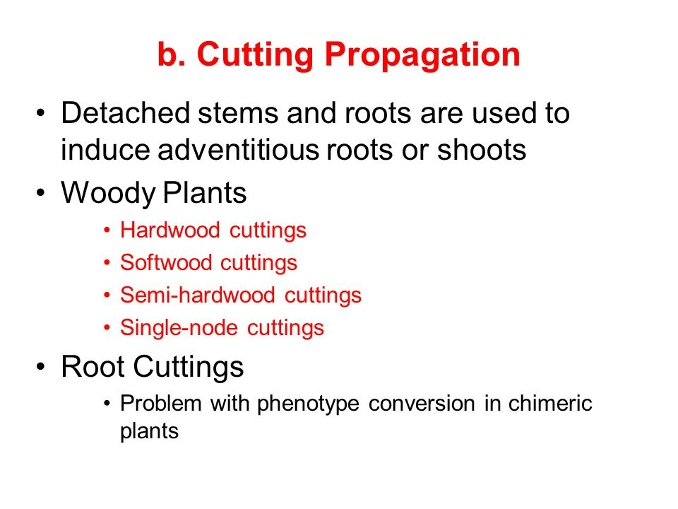 b. Cutting Propagation Detached stems and roots are used to induce adventitious roots or shoots. Woody Plants.