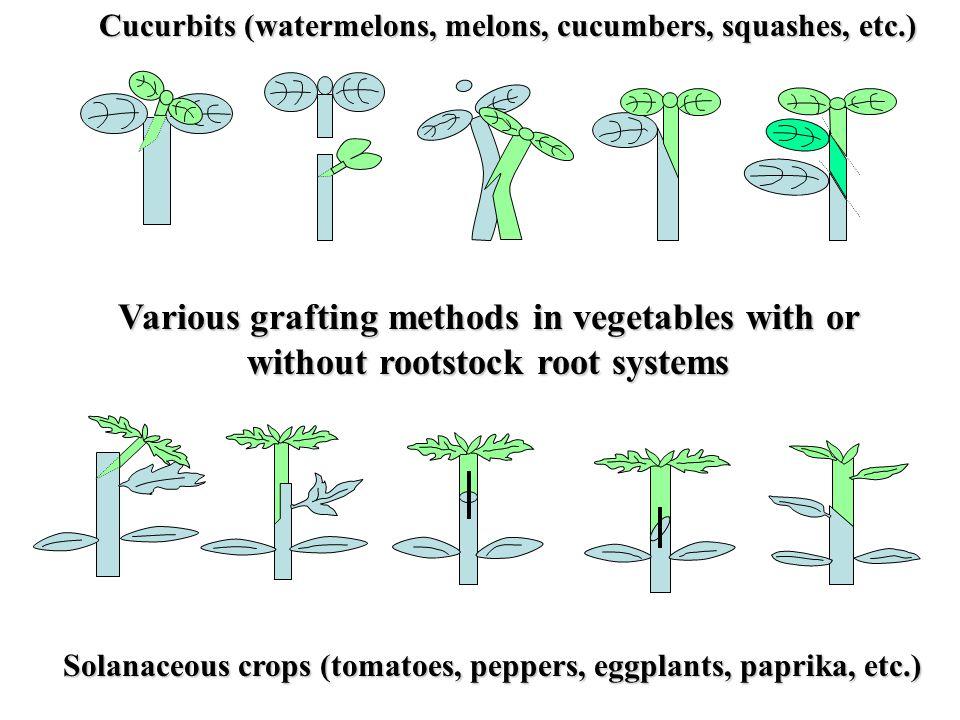 Cucurbits (watermelons, melons, cucumbers, squashes, etc.)