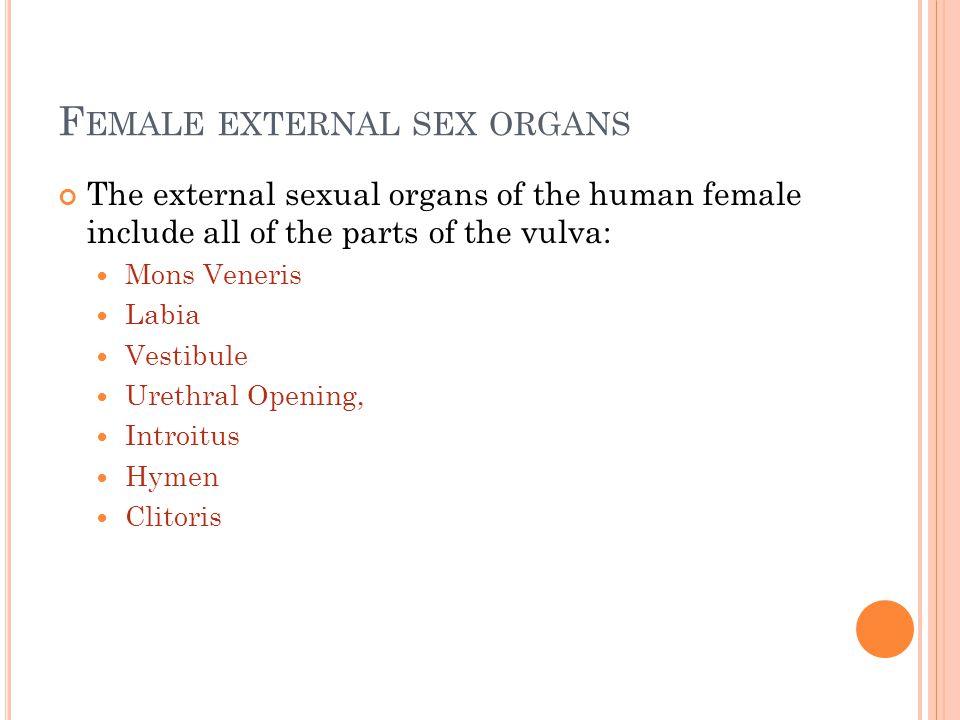 Female external sex organs