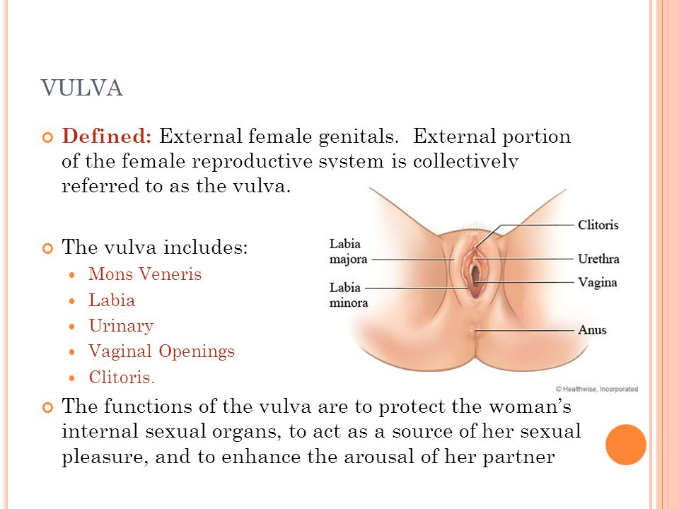 vulva Defined: External female genitals. External portion of the female reproductive system is collectively referred to as the vulva.