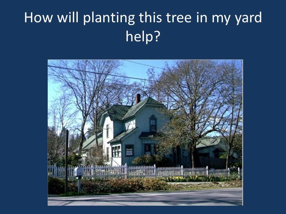 How will planting this tree in my yard help