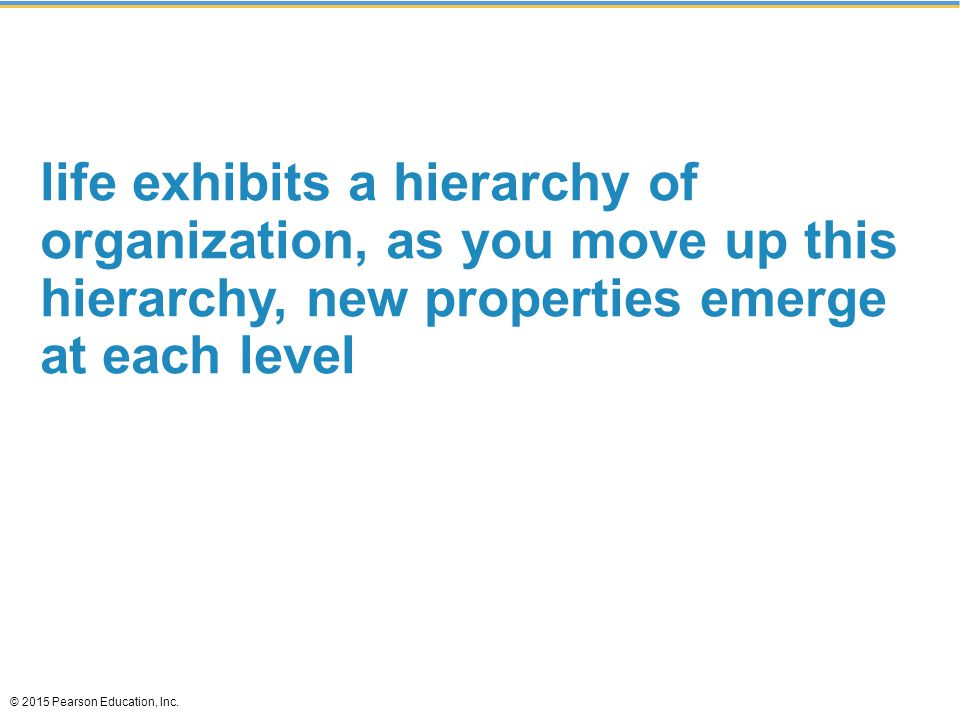 life exhibits a hierarchy of organization, as you move up this hierarchy, new properties emerge at each level