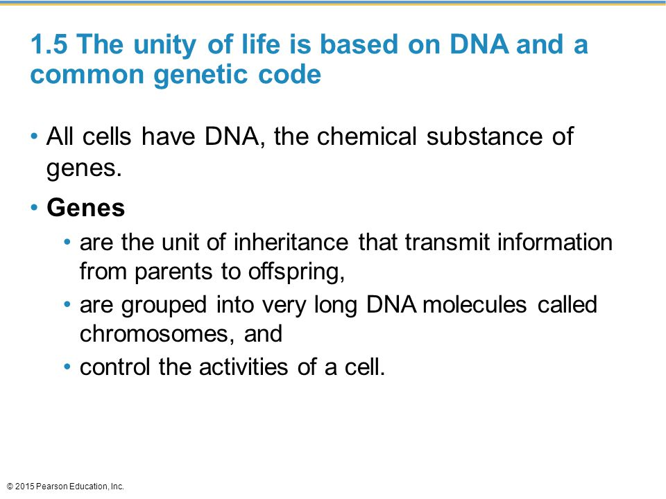 1.5 The unity of life is based on DNA and a common genetic code