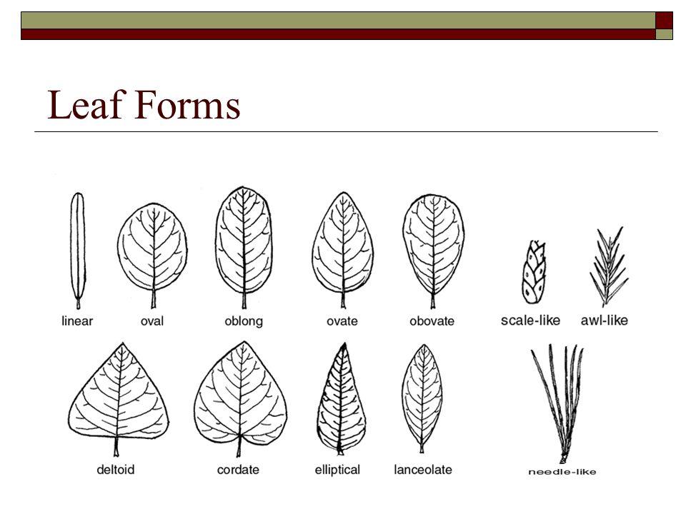 Leaf Forms