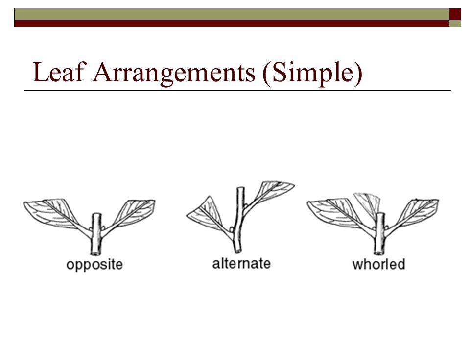 Leaf Arrangements (Simple)