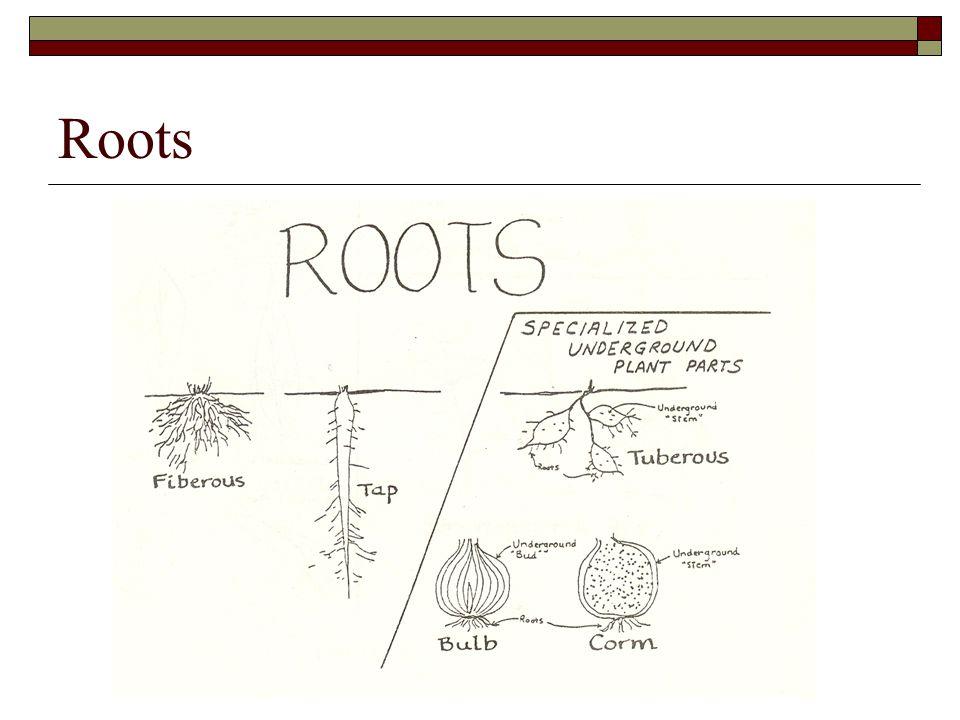 Range Plants -- OBJ 1: PPT