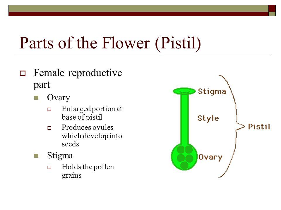 Parts of the Flower (Pistil)